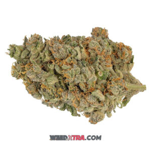 ACDC Strain is a CBD-dominant strain from a phenotype ofcannatonic. remarkable THC:CBD ratio of 1:20. With little to no intoxicating effects.