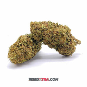 Acapulco Gold has been likened to dinner at a five-star restaurant. It is a well known strain. a powerful cerebral high that raises one's mood without producing overpowering feelings of happiness.