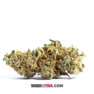 Amnesia weed strain is a sativa marijuana strain made by crossing Cinderella 99, and Jack Herer. Amnesia produces effects that are uplifting, creative, euphoric and ideal for treating mood disorders.