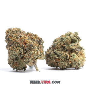 Bay 11 Marijuana is a potent sativa strain with unspecified genetics. Its dense, pale buds are coated in amber resin with a sweet, fruity aroma that initiates immediate relaxation. A favorite strain for patients needing daytime relief, Bay 11 eases pain while boosting appetite.