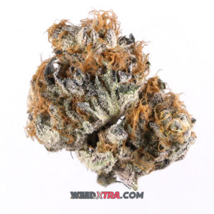 Blueberry weed is an indica marijuana strain made by crossing Purple Thai with Thai. one of the true AAAA Weed strains. Blueberry's legendary status soared to new heights after claiming the High Times' Cannabis Cup 2000 for Best indica Strains