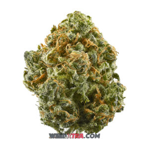 Blue Dream Weed strain is a sativa dominant hybrid marijuana made by crossing Blueberry with Haze. Blue dream produces a balanced high accompanied by cerebral stimulation and full-body relaxation