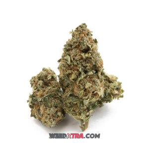 Cannatonic Weed strain is a mostly CBD marijuana strain made by crossing MK Ultra and G13 Haze. It produces a relatively short-lived, mellow high that is also uplifting and powerfully relaxing. peolple choose Cannatonic to treat pain, muscle spasms, anxiety and migraines. cannatonic