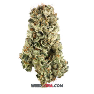 Cherry Pie Marijuana strain also known as Cherry Kush, is a popular and potent indica-leaning hybrid. Cherry Pie is a cross between flavor-packed indica Grandaddy. With buds that are dense and full of orange hairs and a touch of purple, this hybrid strain smells of sweet and sour cherry pie.