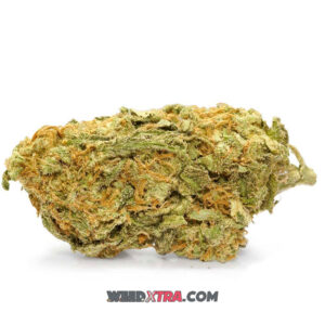 """Cinderella 99 Marijuana Strain also known as C99, or simply """"Cindy,"""" is a sativa-dominant hybrid bred by Mr. Soul of Brothers Grimm. Cindy is best known for its potent cerebral high, sweet fruity flavors, and epic yields."""