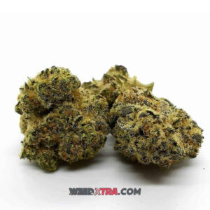 Dancehall Strain marijuana gets its name from an infamous Reggae style played in times of celebration, once you feel its effects, you know why
