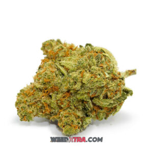Dutch Treat Marijuana is an Amsterdam staple, an indica-dominant hybrid with a 20:80 Sativa/Indica ratio. The strain's limited Sativa genetics produce a near-instant head rush, followed by a numbing body high somewhere short of couch-lock. Dutch Treat weed is recommended for ADHD, PTSD, migraines, and arthritis.