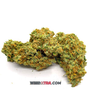 Harlequin strain is renowned for its reliable expression of CBD, giving the ability to relax without sedation & relieve without intoxication.