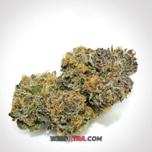 Lavender strain aka Soma #10 is an Indica-dominant hybrid with THC 19% originates from Super Skunk, Big Skunk Korean and Afghani Hawaiian