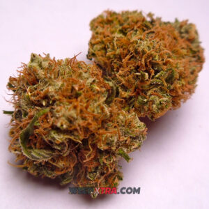 Panama Red strain is a pure Sativa best described as an old-school cannabis classic. From Panama, Panama Red got famous in the late 1960's