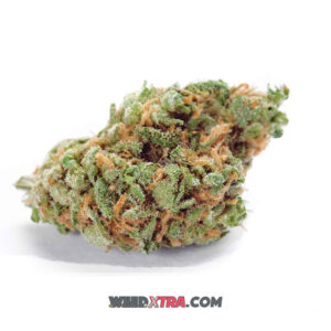 Amnesia Haze has a fresh, fruity hash-like taste & sweet, earthy smell with hints of spicy pepper. light green nugs with darker brown strands