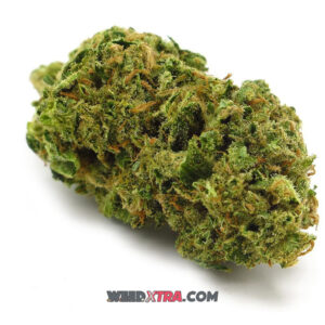 Bruce Banner #3 weed strain is a 70/30 Sativa dominant hybrid by Trump Seeds. Best for daytime usage. Its high boosts mood and creativity