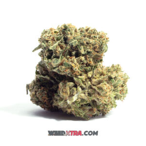 Harle-Tsu strain is a sativa dominant hybrid bred through a cross of the infamous Harlequin X Sour Tsunami strains. It is very rare, but loved