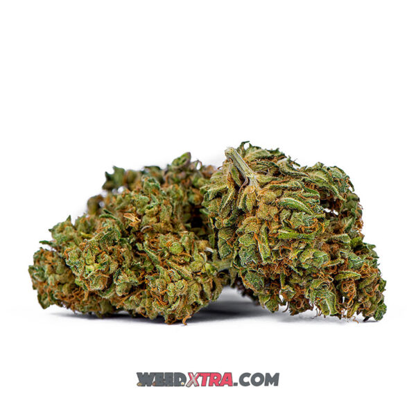 Buy Charlotte's Web strain, a Sativa-dominant hybrid, highly effective in treating pediatric seizure disorders, while also helping with pain